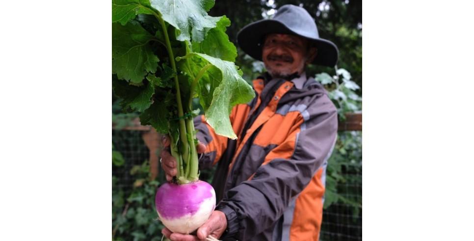 Tukwila urban farmer Jit Gajmer sells turnips and other produce at FIN's Tukwila Village Farmer's Market. Photo courtesy of Food Innovation Network.